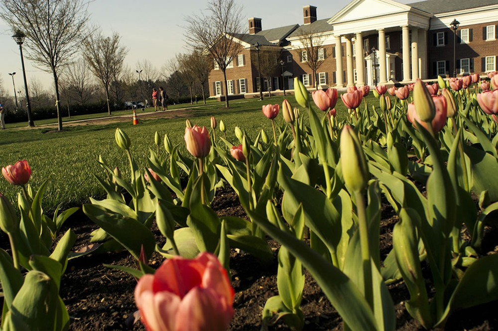 TCNJ Loser Hall Tulips